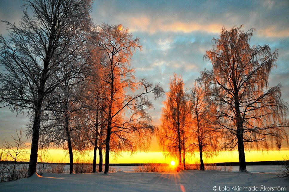 Winter landscape - Sun, ice, snow, and trees in Sweden - Photography by Lola Akinmade Åkerström